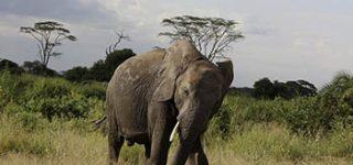 7 Days Kilimanjaro Safari (Lemosho Route)