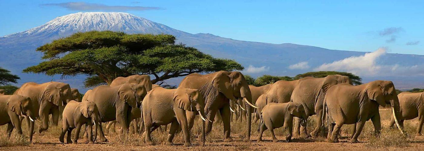 Mount Kilimanjaro National Park kilimanjaro national park kilimanjaro park mt kilimanjaro national park kili serengeti guides amboseli kilimanjaro kilimanjaro national park safari kinapa kilimanjaro national park kilimanjaro national park animals kilimanjaro national park map ngorongoro airport kilimanjaro national park pdf kilimanjaro national park website ngorongoro crater to kilimanjaro airport kilimanjaro airport to ngorongoro crater kilimanjaro national park facts kilimanjaro amboseli kilimanjaro to ngorongoro crater ngorongoro to kilimanjaro airport ngorongoro crater airport mount kilimanjaro national park activities visit kilimanjaro national park mount kilimanjaro park