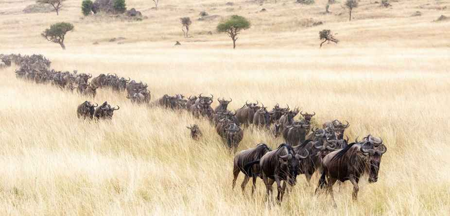 8 days Kilimanjaro and Serengeti Wildlife safari