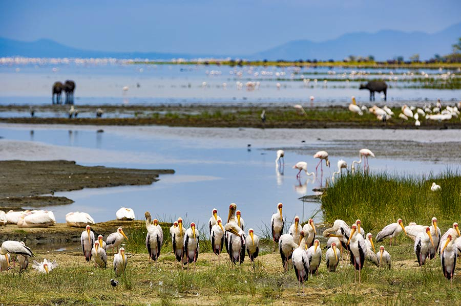 13 days Tanzania safari