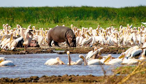 15 days Kilimanjaro and northern Tanzania wildlife safari