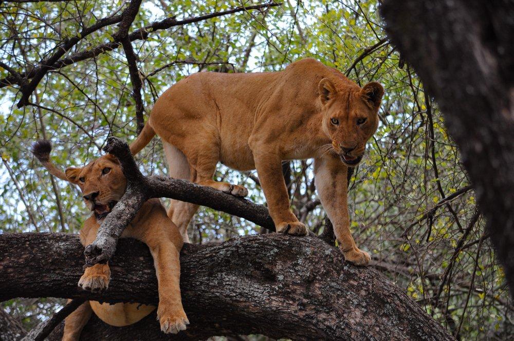 8 days budget Tanzania safari