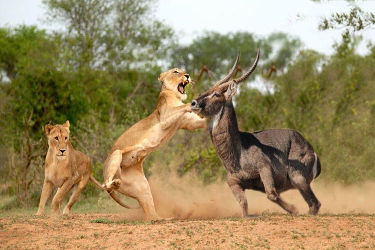 6 days Mara and Serengeti wildlife tour